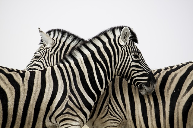 animales fondo